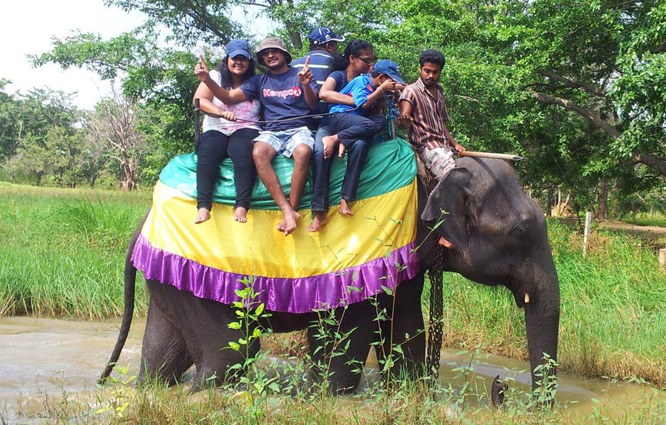 safari111