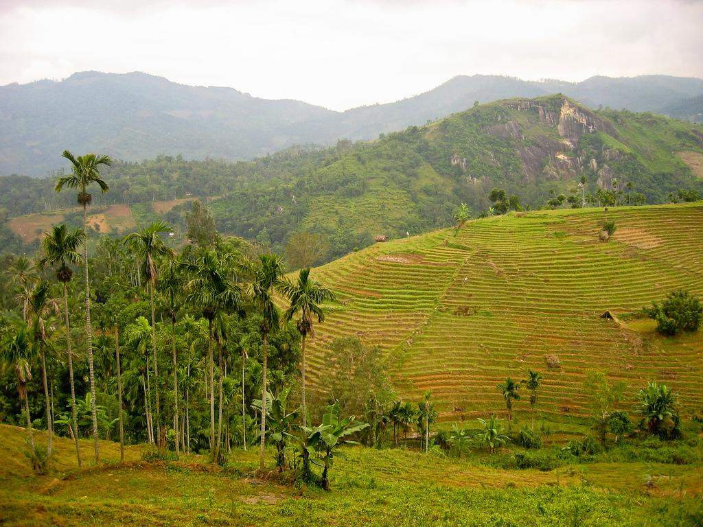 Sri Lanka Landscape photo