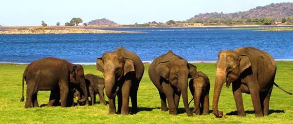 Udawalawe National Park