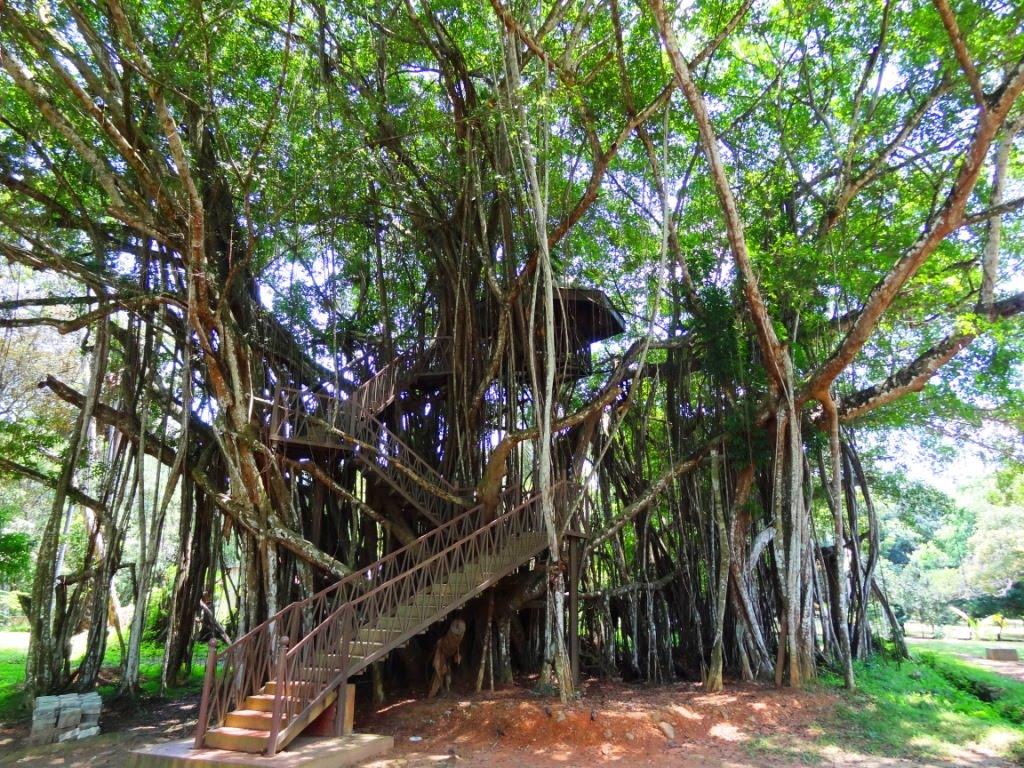 Henarathgoda Botanical Gardens