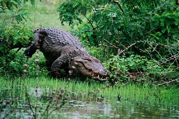 Yala National wild life park