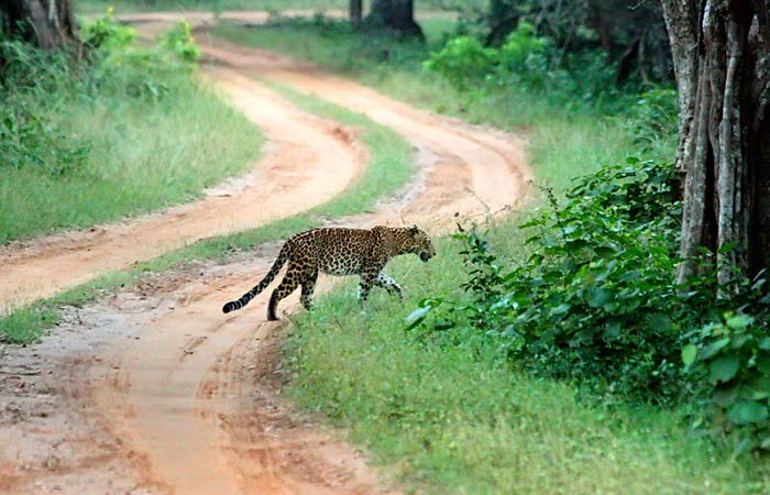 6.Visit to Wilpaththu National Park