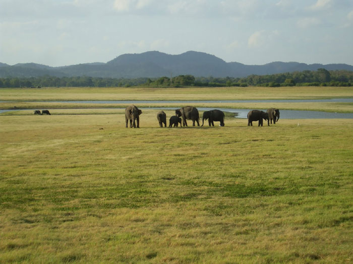 First is Gal Oya National Park