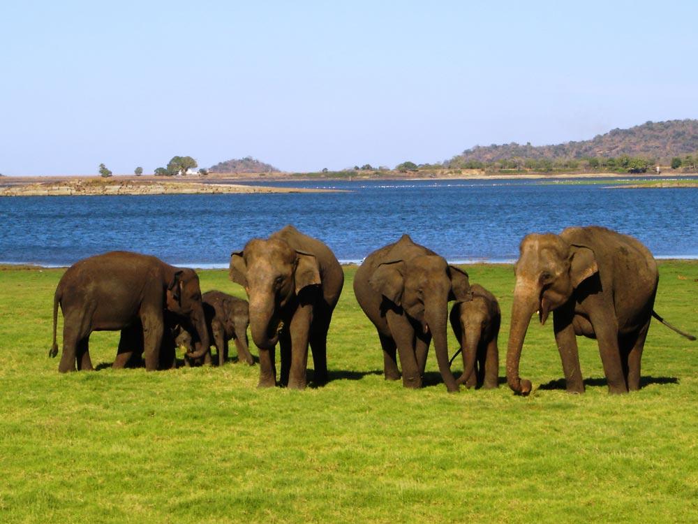 sri-lanka-yala-national-park-sri-lanka1